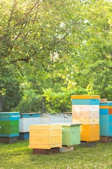 Beautiful wooden hives on apiary in summer in cherry orchard