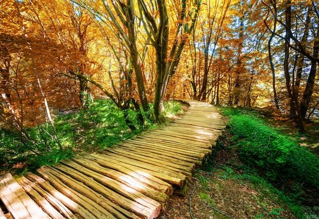 Красивая деревянная дорожка на плитвицком озере в хорватии
