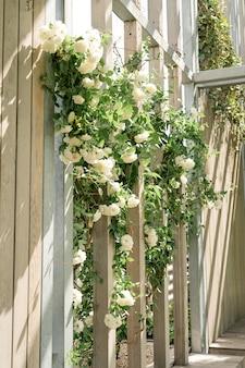 公園や庭の白いバラと美しい木製の壁