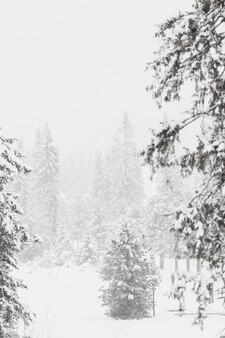Belli boschi nella foresta invernale