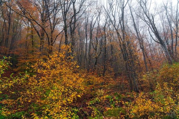 美しい黄色い秋の森