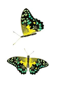 흰색 배경에 고립 된 아름 다운 노란 나비