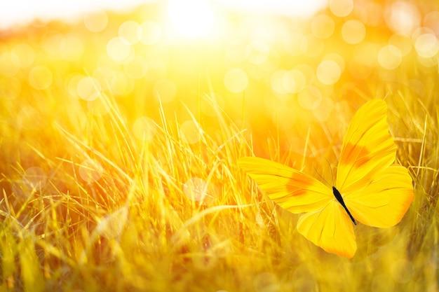 Beautiful yellow butterfly on the meadow bokeh.