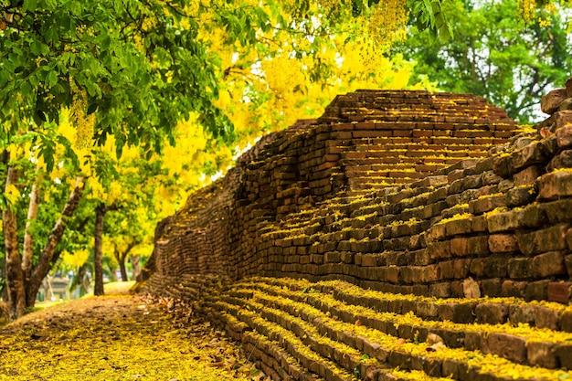 Красивое цветение желтого свища кассии (дерево золотого ливня) зацветает на дереве вокруг стены рва в чиангмае на севере таиланда. путешествует по юго-восточной азии.