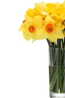 Красивые желтые нарциссы в прозрачной вазе на белом
