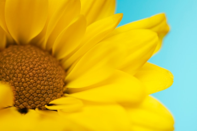 Beautiful yellow flower closeup