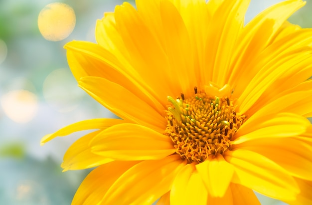 Beautiful yellow flower macro on abstract background, petals and flower stamens close-up.