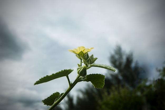 Beautiful yellow flowers in greenery