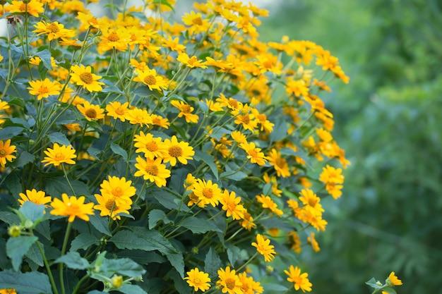 Красивые желтые цветы в саду