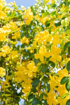 Beautiful yellow flowers with green leaves against blue sky