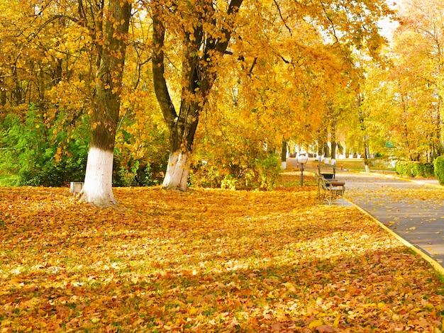 公園の美しい黄色の葉