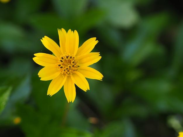 Beautiful yellow on green background