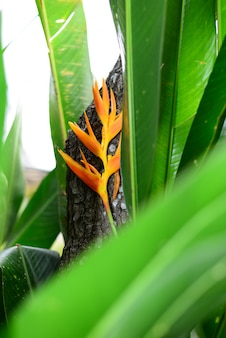 Beautiful yellow heliconia flower and leaves in front of wooden bark