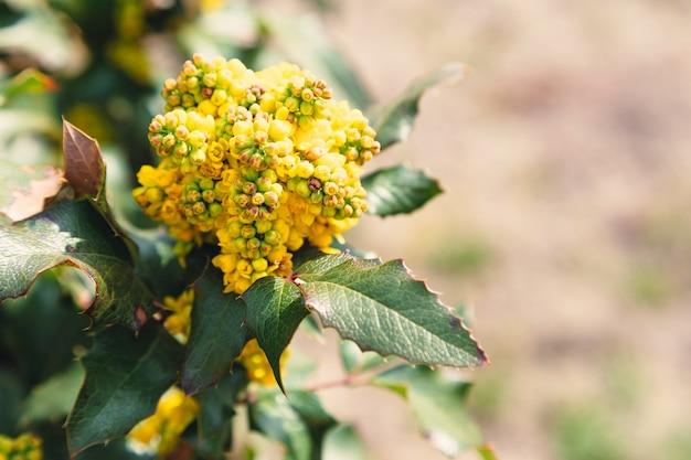 아름다운 노란색 감 꽃