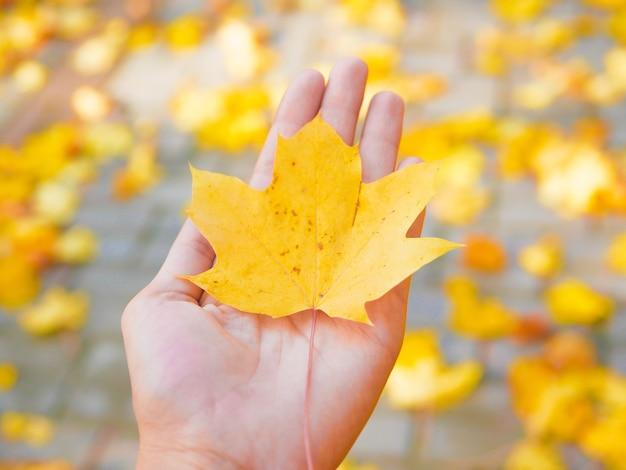 手のひらで開催された美しい黄色のカエデの葉
