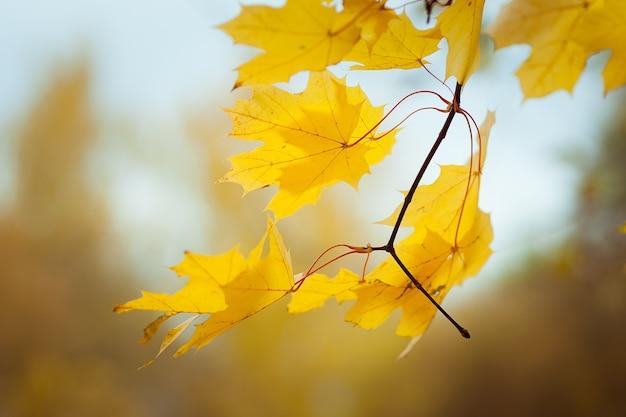 가을 근접 촬영에 아름다운 노란 단풍