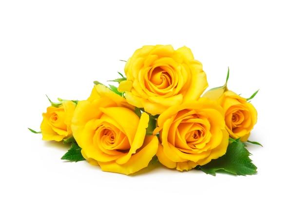 分離された美しい黄色のバラ