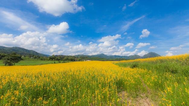 아름 다운 노란 선 헴 꽃
