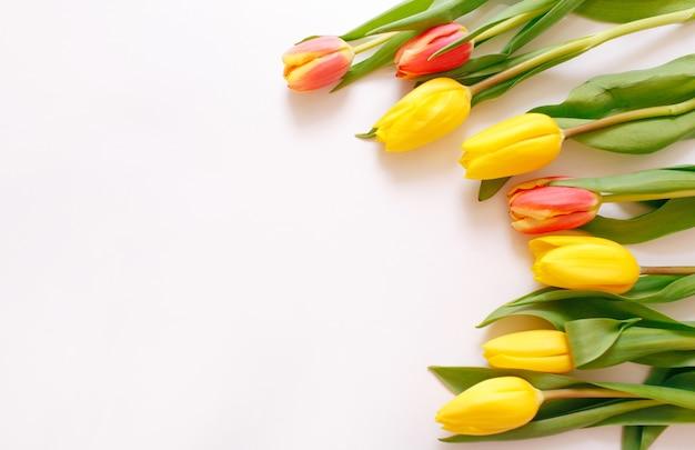 Красивые желтые тюльпаны на белом фоне, место для текста сверху.
