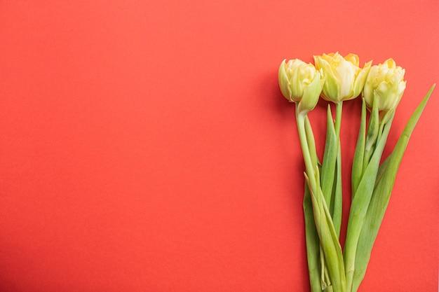 コピースペースと色とりどりの紙の背景に美しい黄色のチューリップ。春、夏、花、色のコンセプト、女性の日。