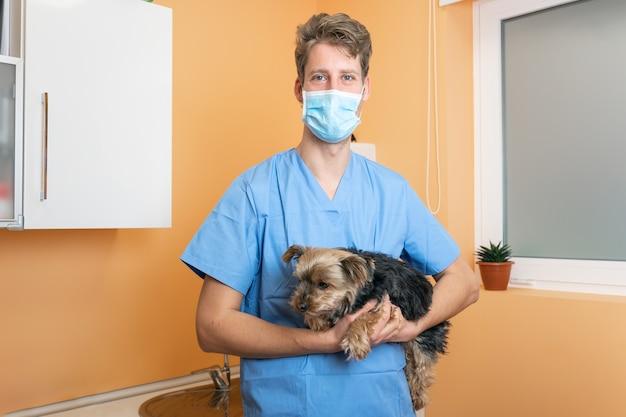 동물 병원에서 아름다운 요크셔 테리어, 의사는 애완 동물 관리 개념을 잡고 껴안고 있습니다.