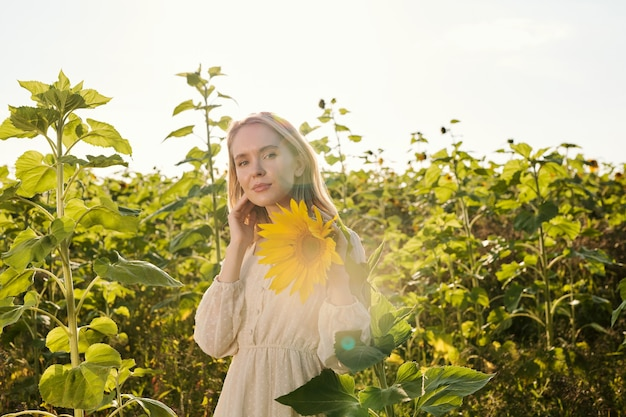 흰색 컨트리 스타일 드레스를 입은 아름다운 젊은 금발 여성이 해바라기 밭을 배경으로 카메라 앞에 서서 노란색 꽃 중 하나를 바라보고 있습니다.