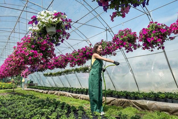 花の温室のエプロン散水植物の美しい若い女性の庭師。植物の世話をするという概念