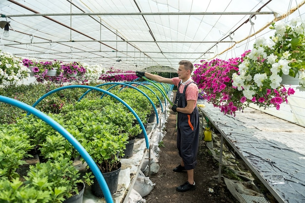 Beautiful young guy pours blossom flowers in the hothouse. botanical