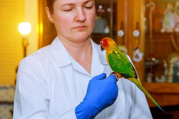 Beautiful young veterinarian feeding parrot in vet clinic