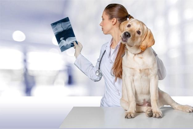 배경에 개와 엑스레이를 가진 아름다운 젊은 수의사