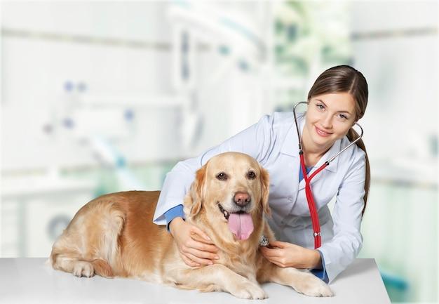 흰색 바탕에 강아지와 함께 아름 다운 젊은 수의사