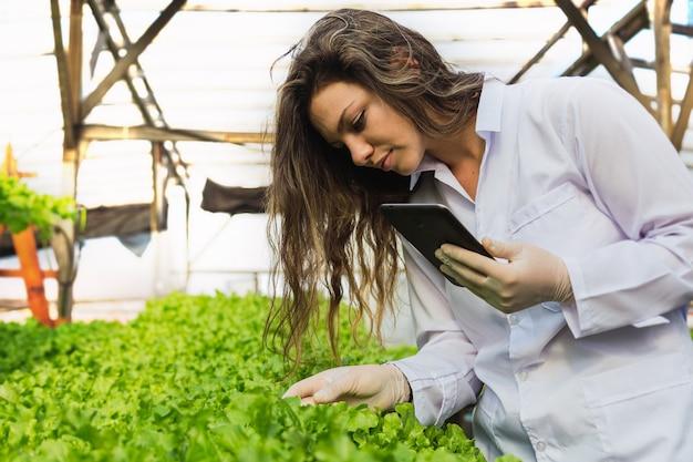 水耕レタスを収穫する美しい若い女性