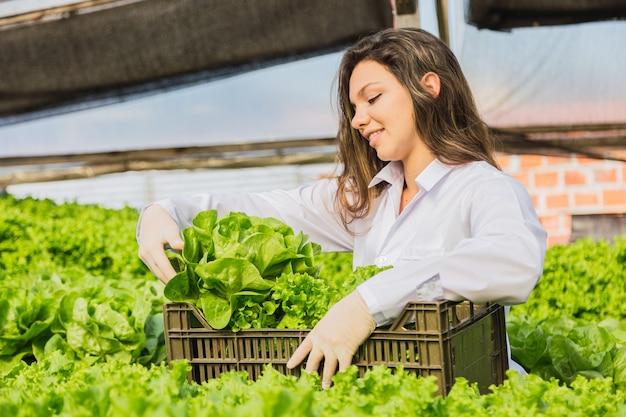 Красивая молодая женщина, собирающая гидропонный салат