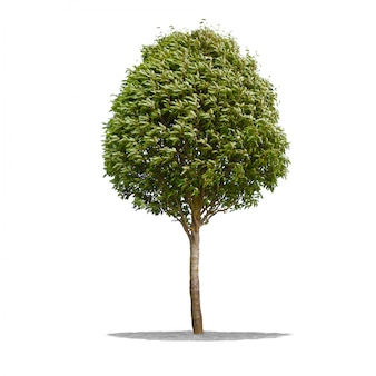 Beautifull green tree on white in high definition