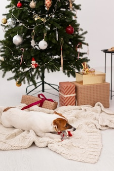 Beautiul christmas at home concept