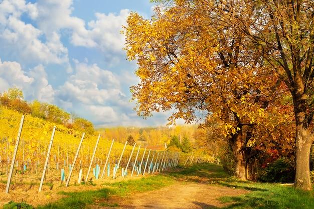 Beautufil autumn rural landscape