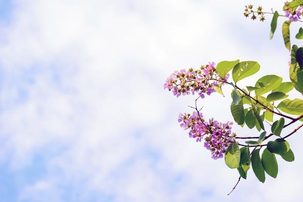 하늘을 배경으로 아름다움과 다채로운 야생화.