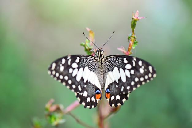 Красота бабочки на цветке в тропическом саду