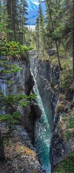 Beauty creek icefields parkway alberta canada