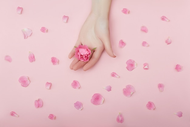 赤い花を持つ女性の美しさの手は、ピンクの紙の背景のテーブルにあります。