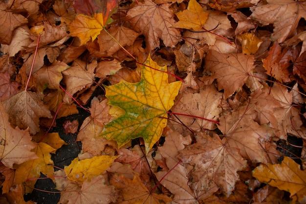 Beauty leaf in the garden