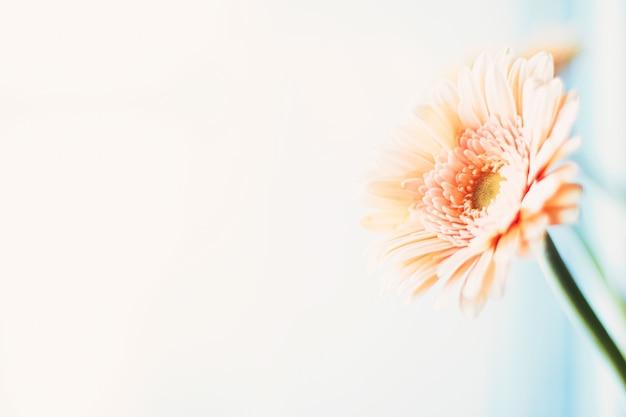 デイジーフラワーフローラルアートの美しさと自然の美しさ