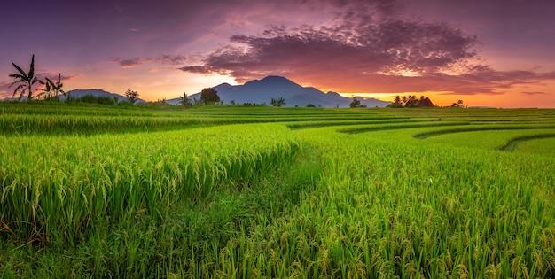 田んぼの上の山と溶岩の空の景色を望む朝の美しさ