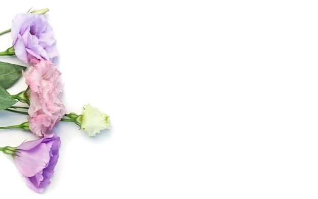 Цветок эустомы розовый красоты изолированный на белой предпосылке.