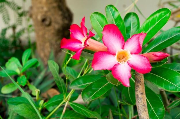 美しいピンクの花、庭園