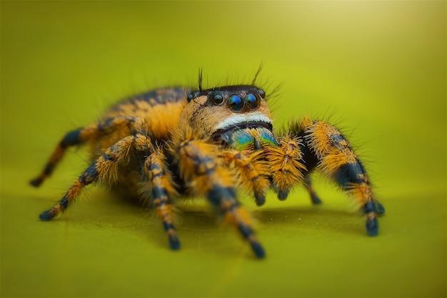 아름다움 거미 매크로 촬영