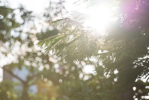 美しさの春の日、緑の葉と輝く太陽と抽象的な季節の背景
