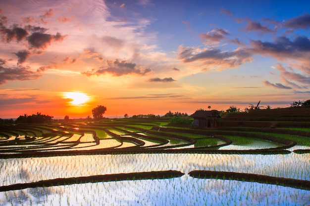 Beauty sunset at paddy fields terrace indonesia
