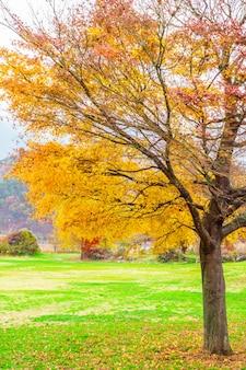 Beauty tree autumn nature brown
