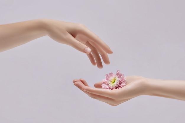 손에 분홍색 꽃을 가진 아름다움 여자입니다. 손 피부 관리를위한 천연 화장품. 손 보습 및 주름 개선 및 노화 방지 트리트먼트